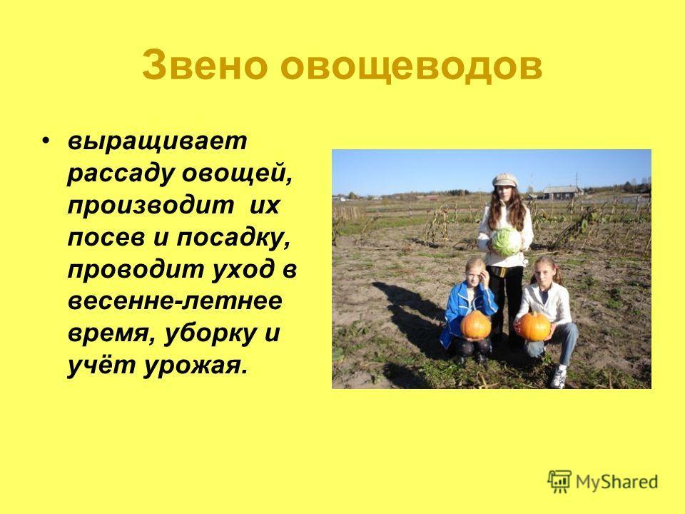 Звено овощеводов выращивает рассаду овощей, производит их посев и посадку, проводит уход в весенне-летнее время, уборку и учёт урожая.