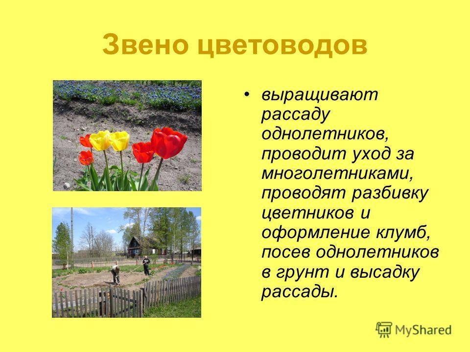 Звено цветоводов выращивают рассаду однолетников, проводит уход за многолетниками, проводят разбивку цветников и оформление клумб, посев однолетников в грунт и высадку рассады.