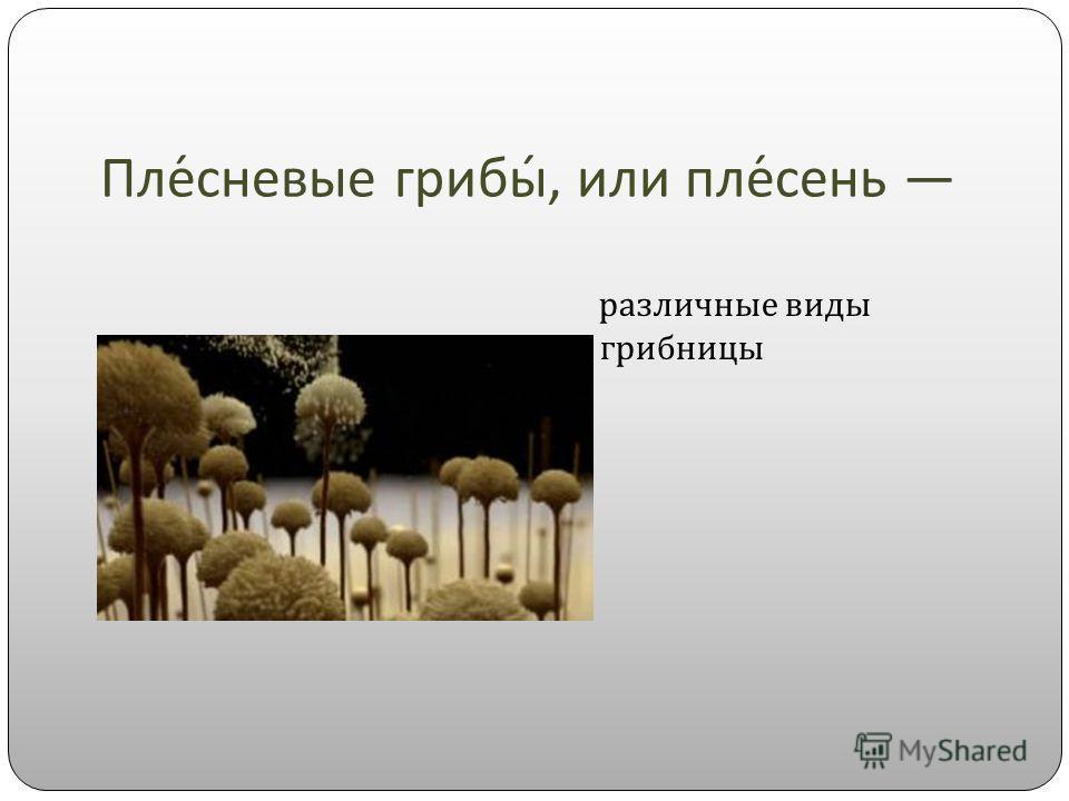 Плесневые грибы, или плесень различные виды грибницы