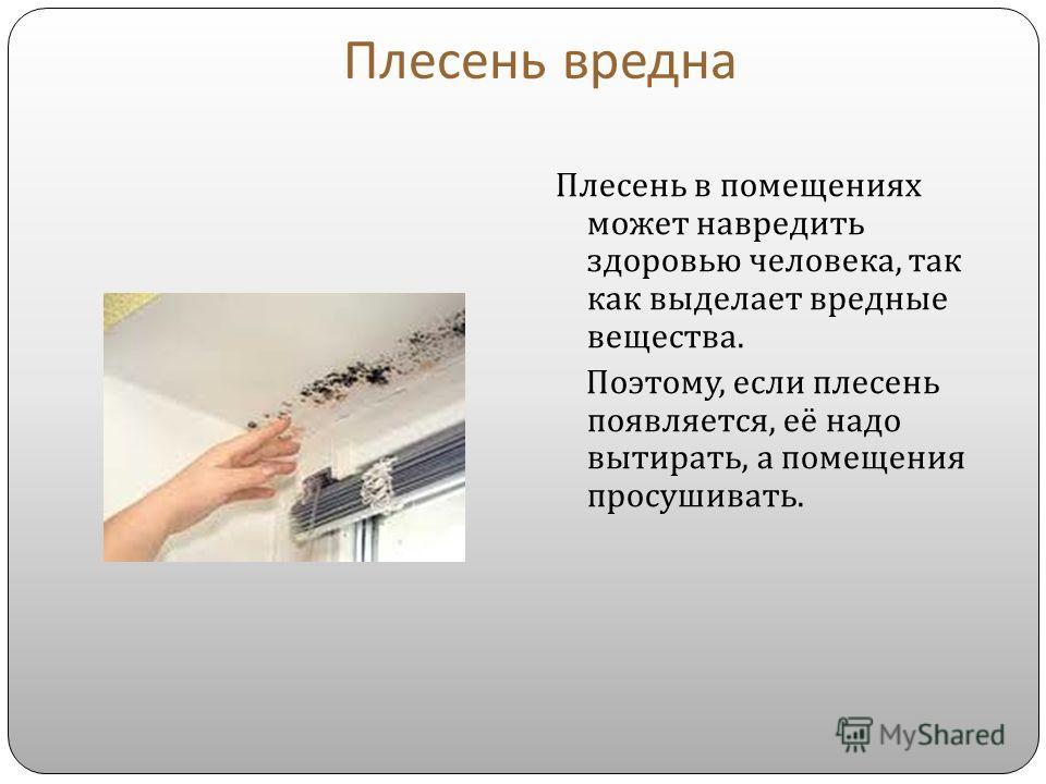 Плесень вредна Плесень в помещениях может навредить здоровью человека, так как выделает вредные вещества. Поэтому, если плесень появляется, её надо вытирать, а помещения просушивать.