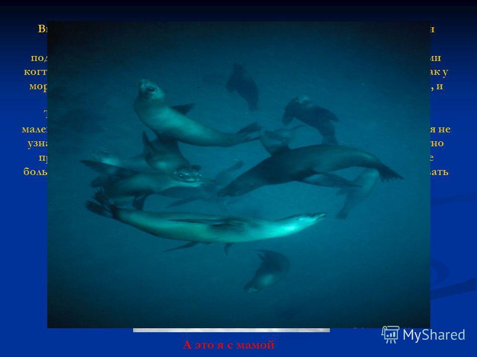 Вне воды тюлень может показаться ленивым и неуклюжим. По суше они ползают, словно большие гусеницы, толкая переднюю часть тела и подтягивая заднюю. Выползая из воды, тюлени цепляются за лед передними когтистыми ластами. Мышцы плечевого пояса у тюлене