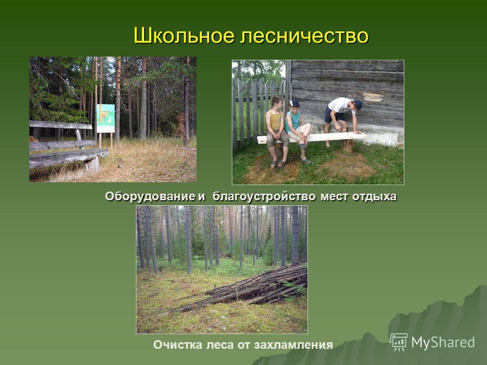 Школьное лесничество Оборудование и благоустройство мест отдыха Очистка леса от захламления