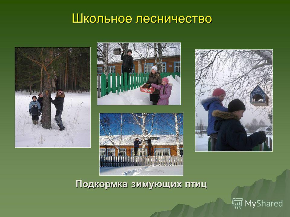Школьное лесничество Подкормка зимующих птиц