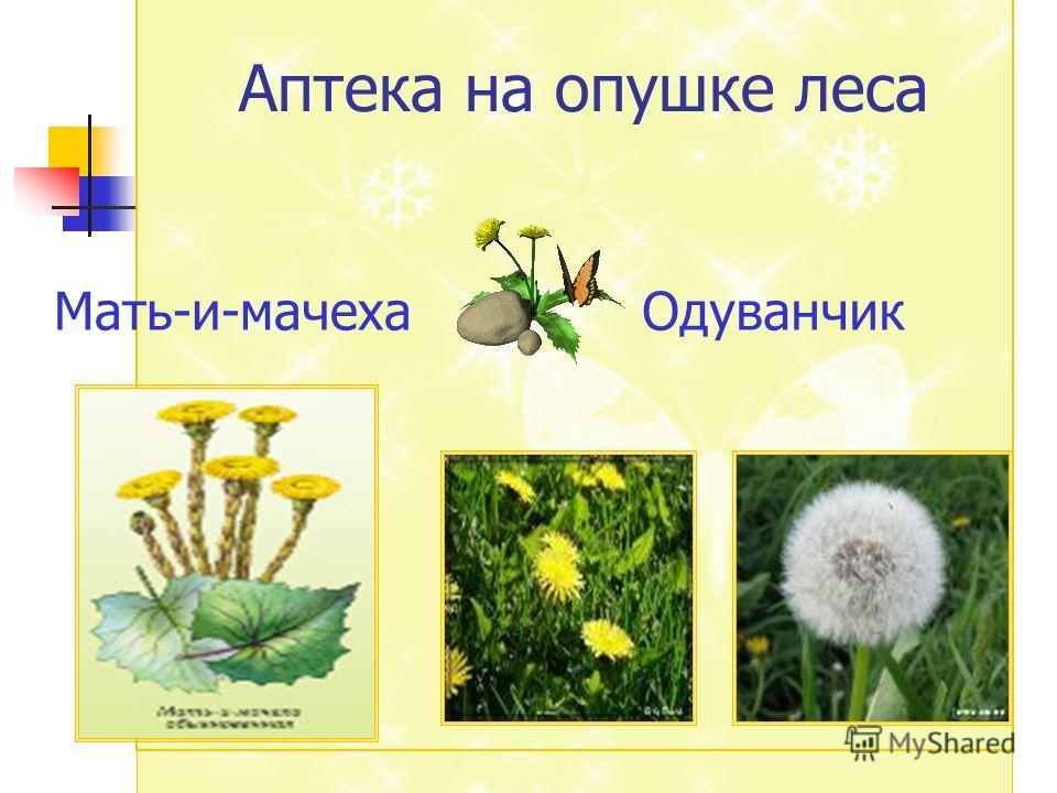 Опушка леса Аптека на опушке леса Мать-и-мачехаОдуванчик