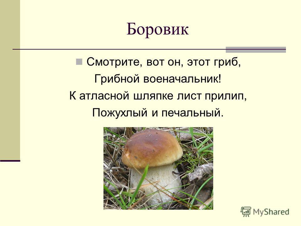 Боровик Смотрите, вот он, этот гриб, Грибной военачальник! К атласной шляпке лист прилип, Пожухлый и печальный.