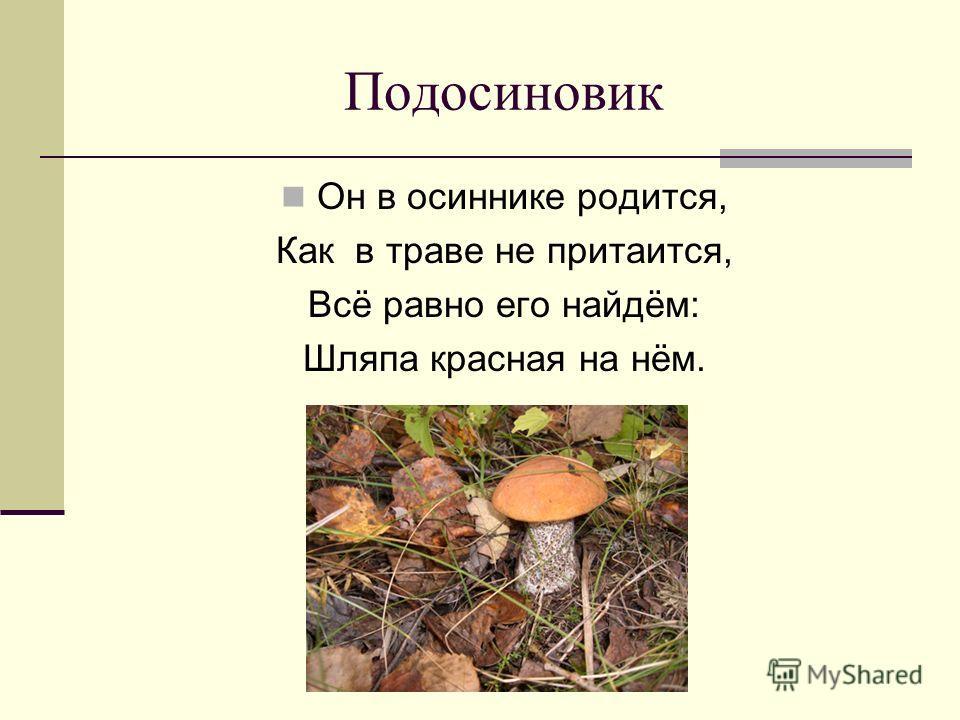 Подосиновик Он в осиннике родится, Как в траве не притаится, Всё равно его найдём: Шляпа красная на нём.