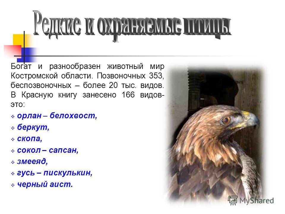 Богат и разнообразен животный мир Костромской области. Позвоночных 353, беспозвоночных – более 20 тыс. видов. В Красную книгу занесено 166 видов- это: орлан – белохвост, беркут, скопа, сокол – сапсан, змееяд, гусь – пискулькин, черный аист.
