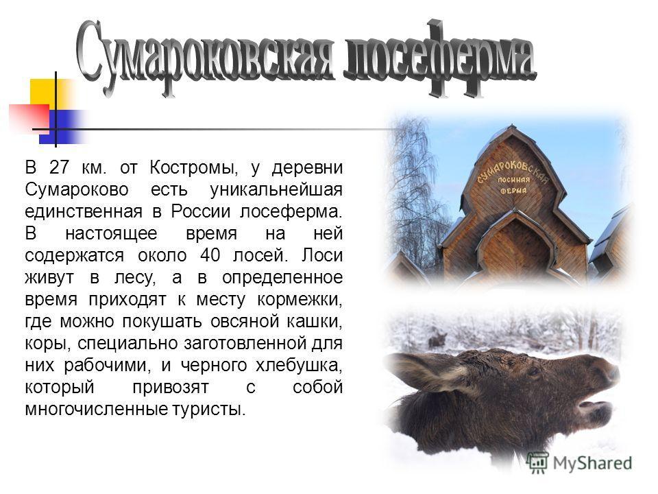 В 27 км. от Костромы, у деревни Сумароково есть уникальнейшая единственная в России лосеферма. В настоящее время на ней содержатся около 40 лосей. Лоси живут в лесу, а в определенное время приходят к месту кормежки, где можно покушать овсяной кашки,