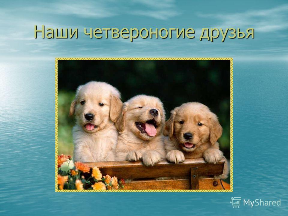 Наши четвероногие друзья