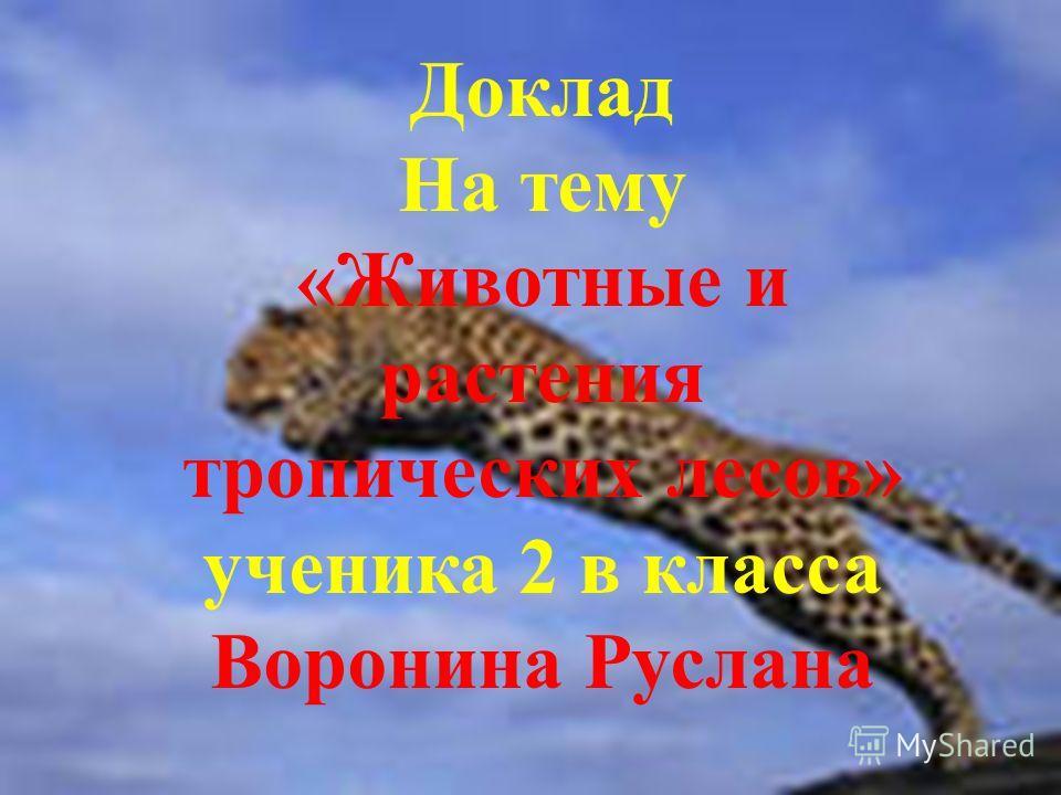 Доклад На тему «<a href='http://www.myshared.ru/slide/200966/' title='животные и растения тропических лесов'>Животные и растения тропических лесов</a>