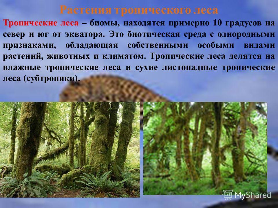Растения тропического леса Тропические леса – биомы, находятся примерно 10 градусов на север и юг от экватора. Это биотическая среда с однородными при