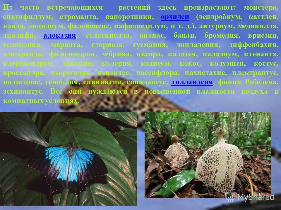 Из часто встречающихся растений здесь произрастают: монстера, спатифиллум, строманта, папоротники, орхидеи (дендробиум, каттлея, ванда, онцидиум, фаленопсис, пафиопедилум, и т. д.), антуриум, мединилла, акалифа, алоказия, селагинелла, ананас, банан,