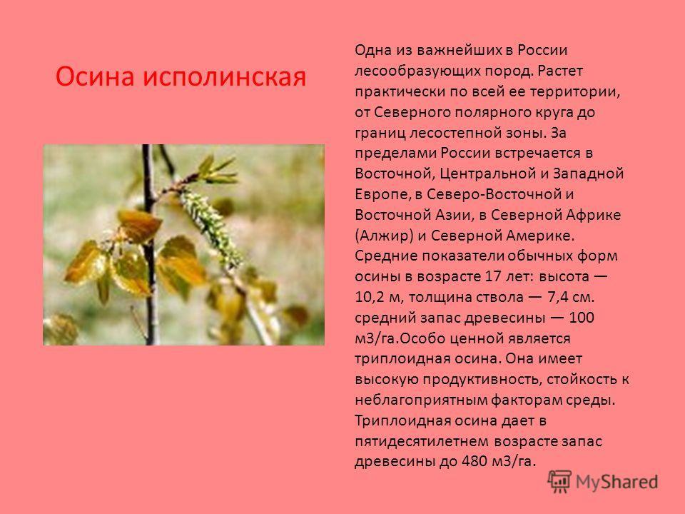 Одна из важнейших в России лесообразующих пород. Растет практически по всей ее территории, от Северного полярного круга до границ лесостепной зоны. За пределами России встречается в Восточной, Центральной и Западной Европе, в Северо-Восточной и Восто