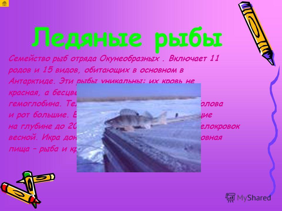 Ледяные рыбы Семейство рыб отряда Окунеобразных. Включает 11 родов и 15 видов, обитающих в основном в Антарктиде. Эти рыбы уникальны: их кровь не красная, а бесцветная, так как не содержит гемоглобина. Тело длинное до 70 см. голое. Голова и рот больш
