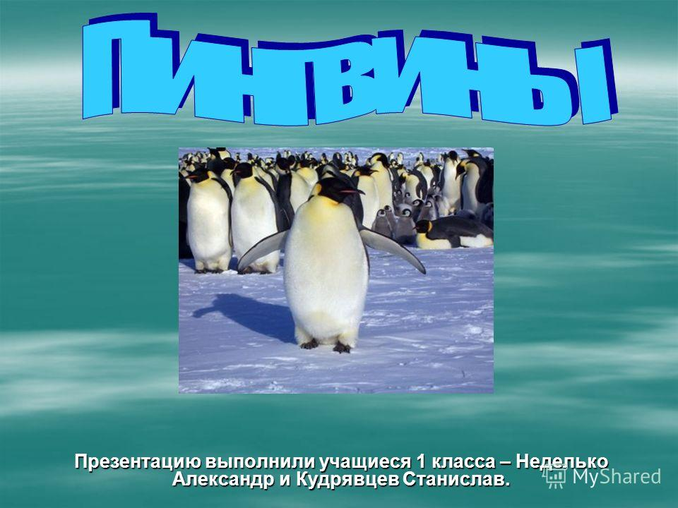 Презентацию выполнили учащиеся 1 класса – Неделько Александр и Кудрявцев Станислав.