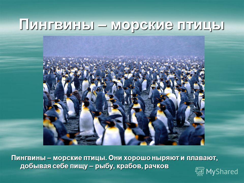 Пингвины – морские птицы Пингвины – морские птицы. Они хорошо ныряют и плавают, добывая себе пищу – рыбу, крабов, рачков