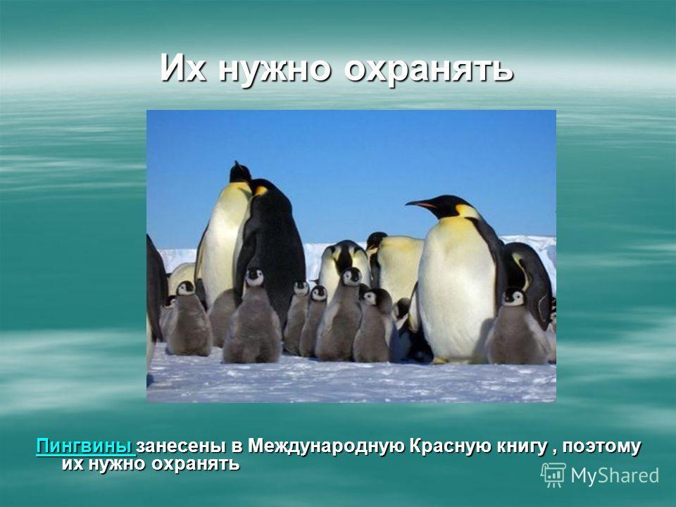 Их нужно охранять Пингвины Пингвины занесены в Международную Красную книгу, поэтому их нужно охранять Пингвины