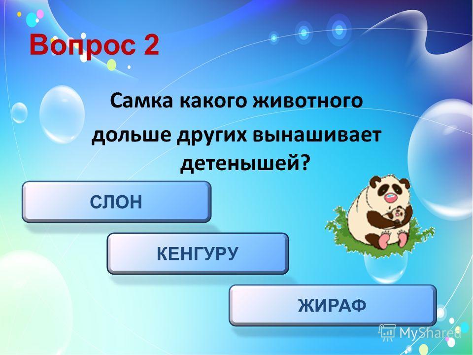 Вопрос 2 СЛОН ЖИРАФ КЕНГУРУ Самка какого животного дольше других вынашивает детенышей?