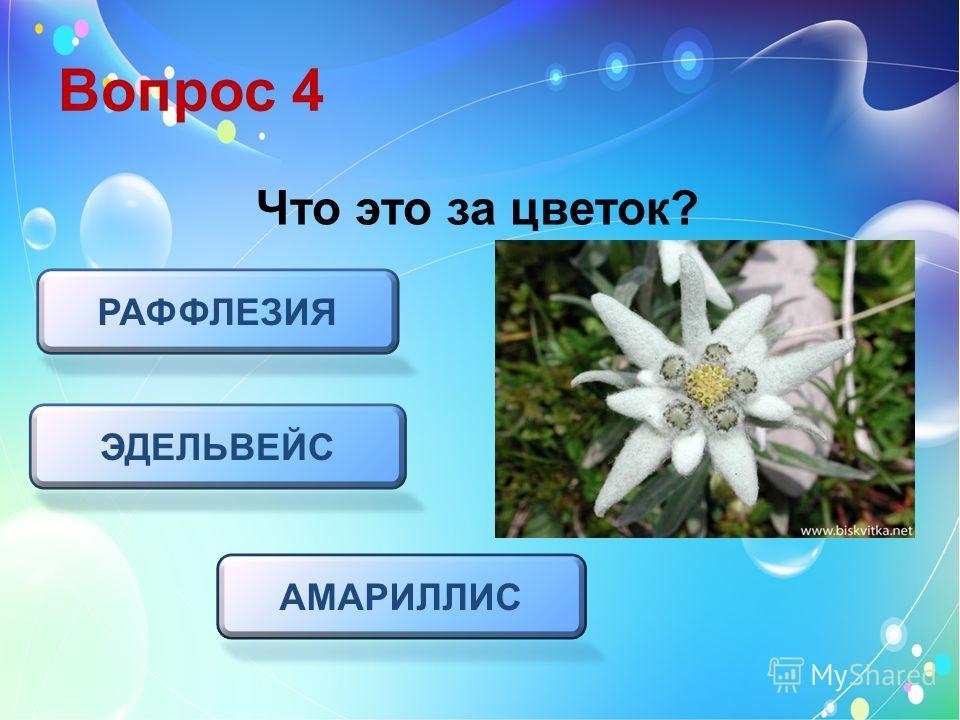 Вопрос 4 Что это за цветок? ЭДЕЛЬВЕЙС РАФФЛЕЗИЯ АМАРИЛЛИС