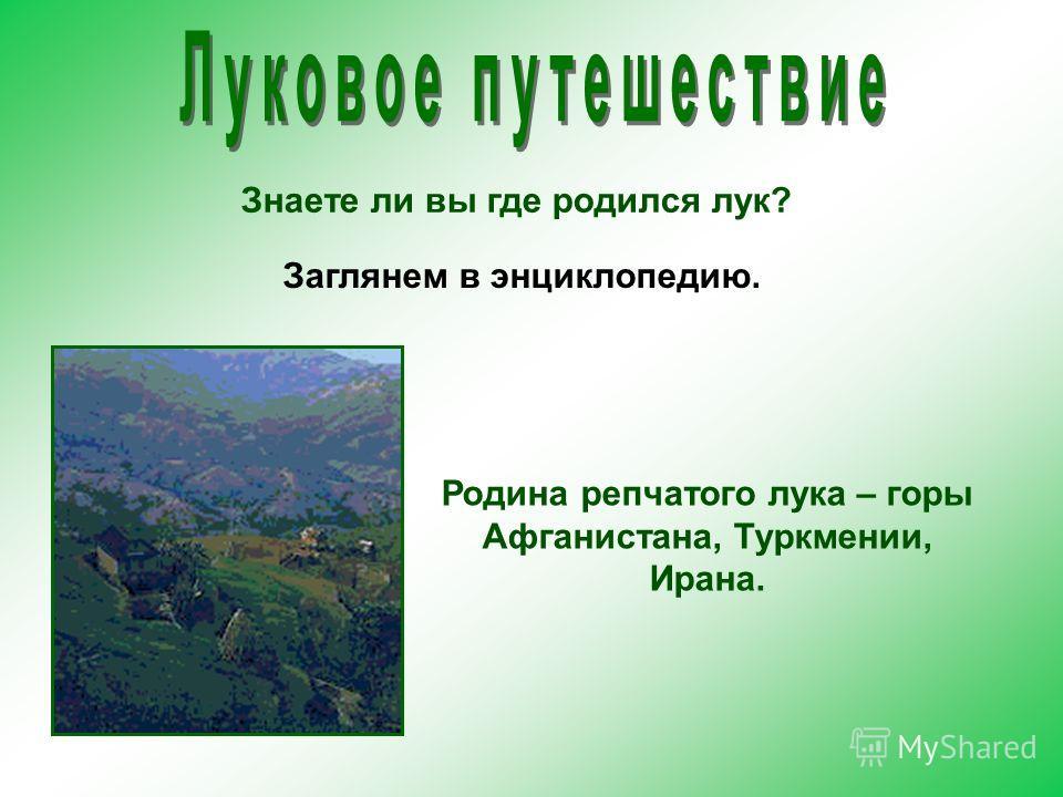 Знаете ли вы где родился лук? Родина репчатого лука – горы Афганистана, Туркмении, Ирана. Заглянем в энциклопедию.