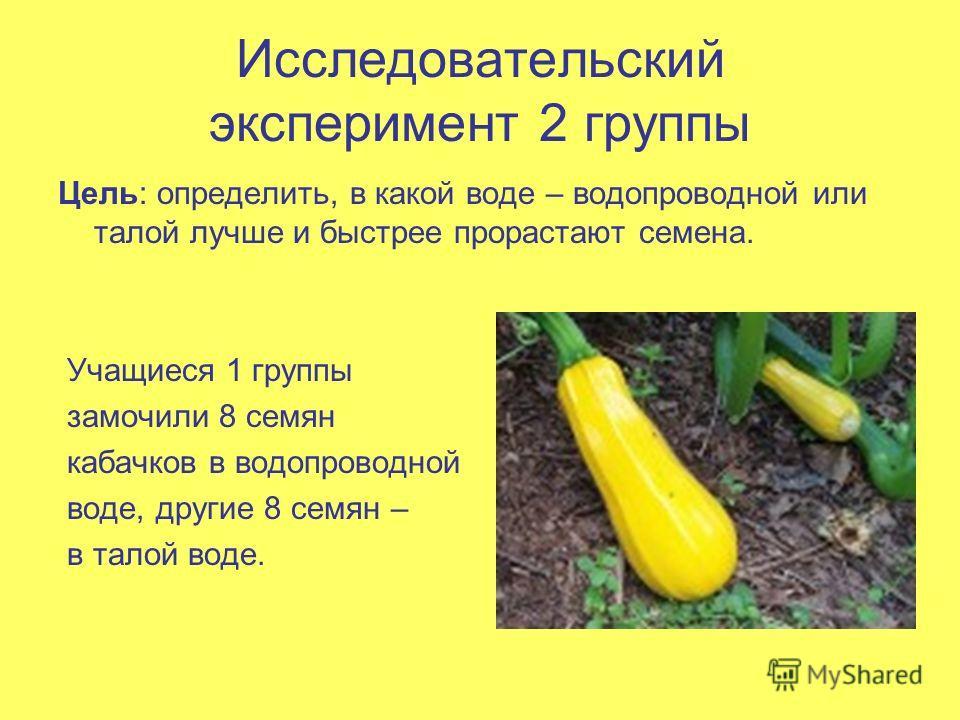 Исследовательский эксперимент 2 группы Цель: определить, в какой воде – водопроводной или талой лучше и быстрее прорастают семена. Учащиеся 1 группы замочили 8 семян кабачков в водопроводной воде, другие 8 семян – в талой воде.