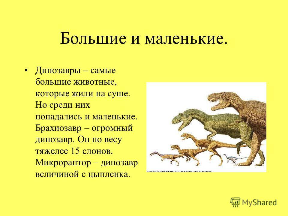 Большие и маленькие. Динозавры – самые большие животные, которые жили на суше. Но среди них попадались и маленькие. Брахиозавр – огромный динозавр. Он по весу тяжелее 15 слонов. Микрораптор – динозавр величиной с цыпленка.