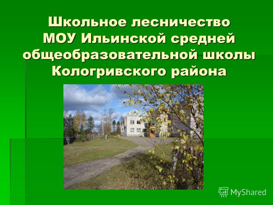 Школьное лесничество МОУ Ильинской средней общеобразовательной школы Кологривского района