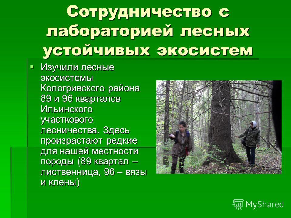 Сотрудничество с лабораторией лесных устойчивых экосистем Изучили лесные экосистемы Кологривского района 89 и 96 кварталов Ильинского участкового лесничества. Здесь произрастают редкие для нашей местности породы (89 квартал – лиственница, 96 – вязы и
