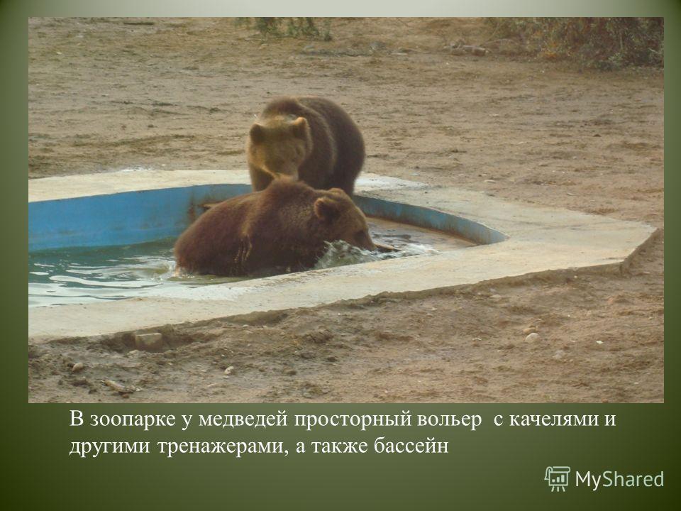 В зоопарке у медведей просторный вольер с качелями и другими тренажерами, а также бассейн