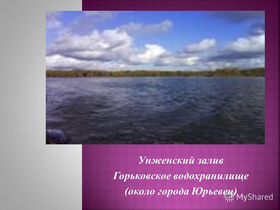 Унженский залив Горьковское водохранилище (около города Юрьевец)