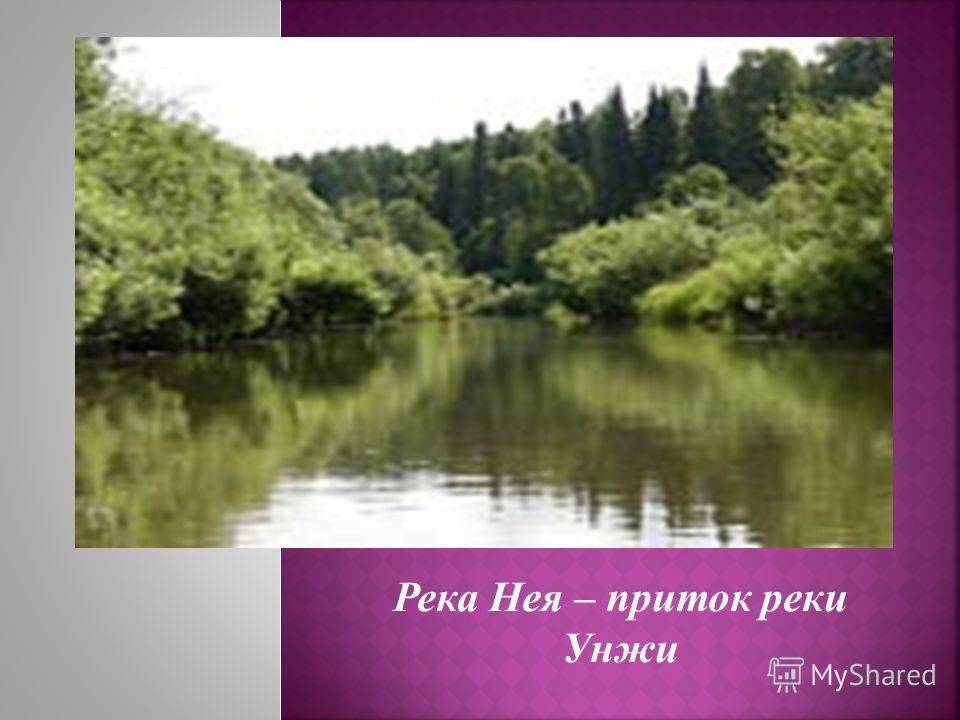 Река Нея – приток реки Унжи