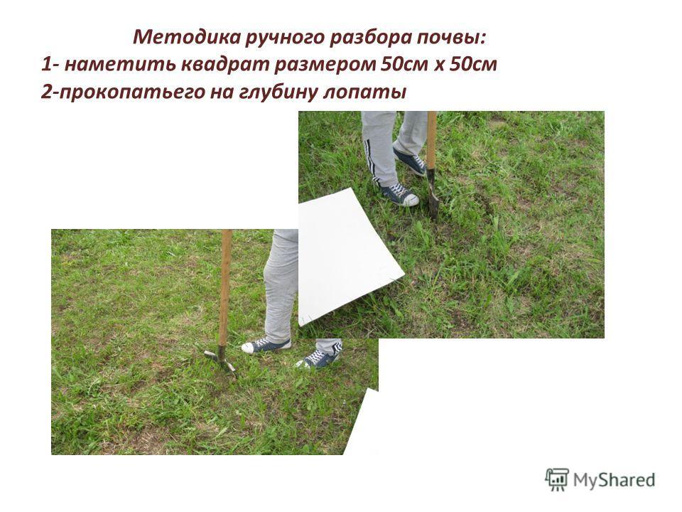 Методика ручного разбора почвы: 1- наметить квадрат размером 50см х 50см 2-прокопатьего на глубину лопаты