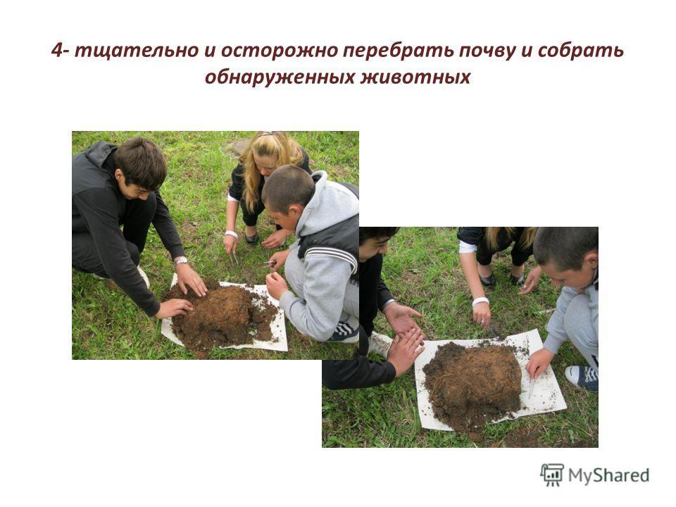 4- тщательно и осторожно перебрать почву и собрать обнаруженных животных