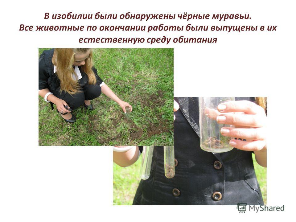 В изобилии были обнаружены чёрные муравьи. Все животные по окончании работы были выпущены в их естественную среду обитания