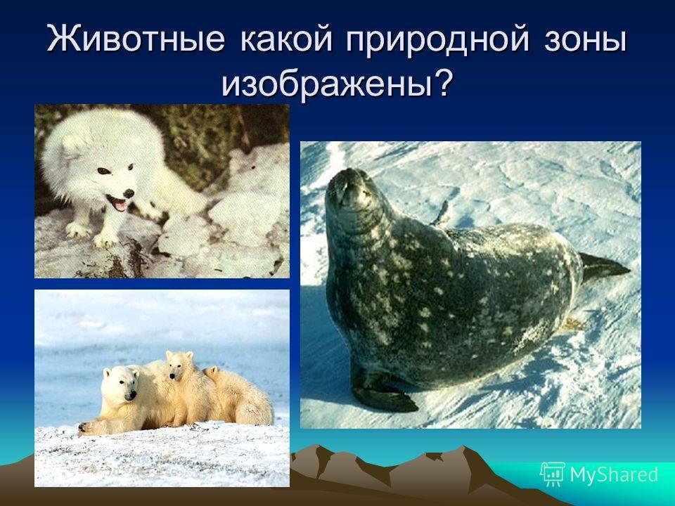 Животные какой природной зоны изображены?