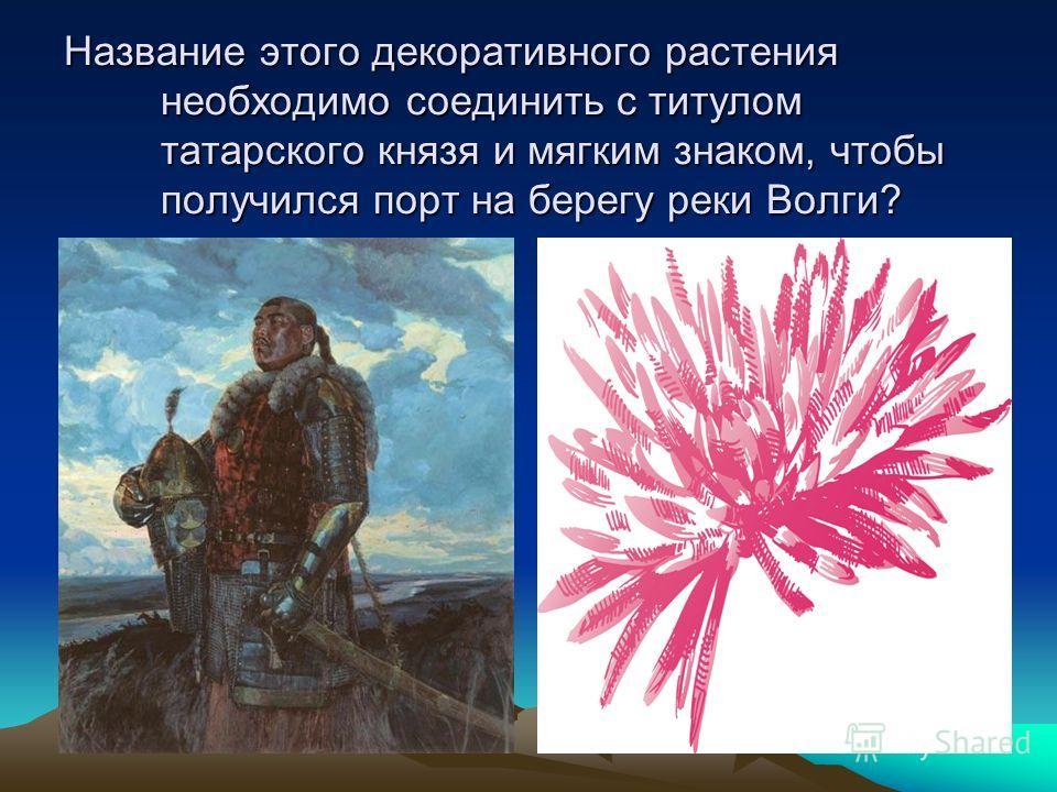 Название этого декоративного растения необходимо соединить с титулом татарского князя и мягким знаком, чтобы получился порт на берегу реки Волги?