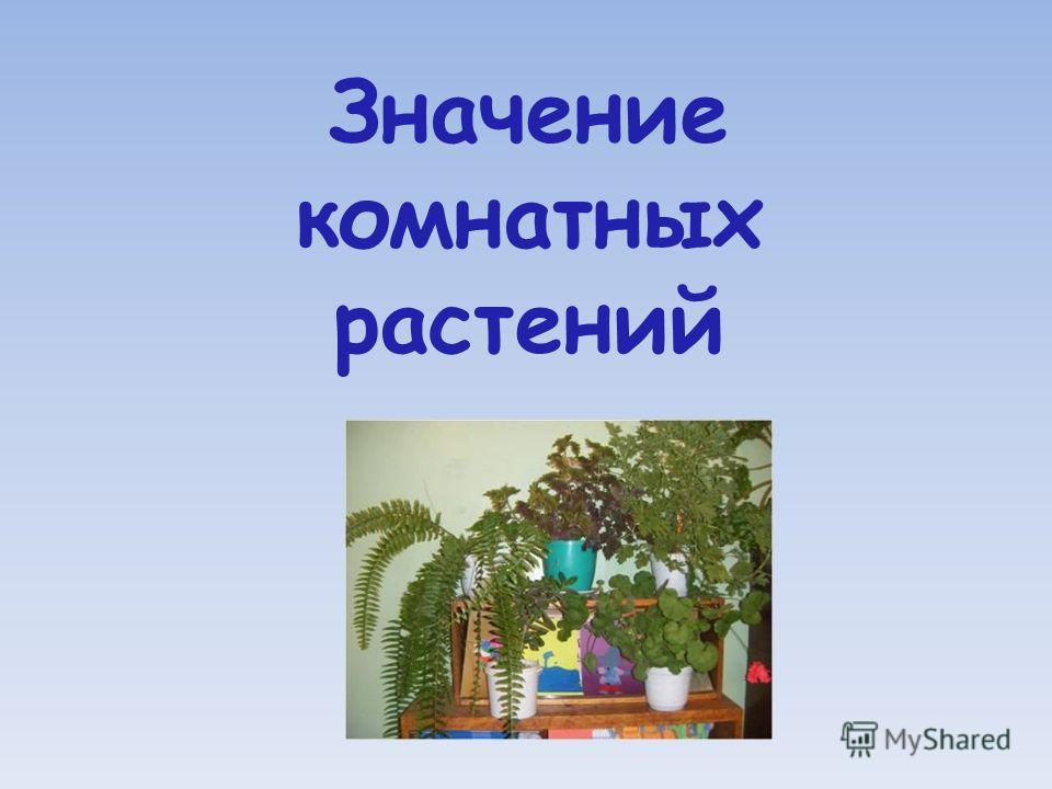 Значение комнатных растений