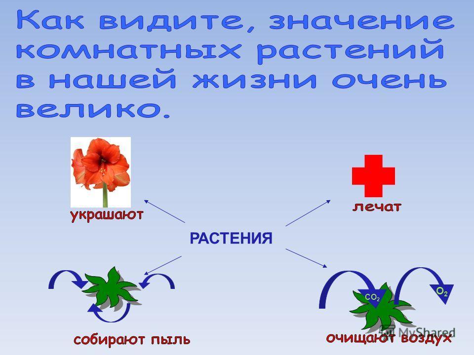 РАСТЕНИЯ О2О2 СО 2