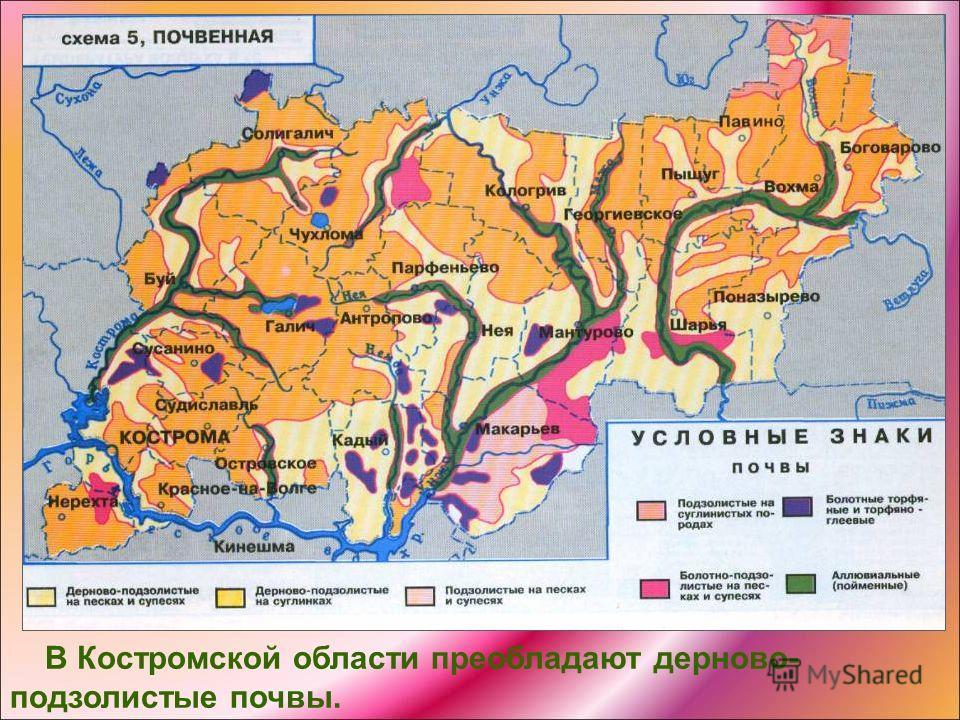 В Костромской области преобладают дерново- подзолистые почвы.