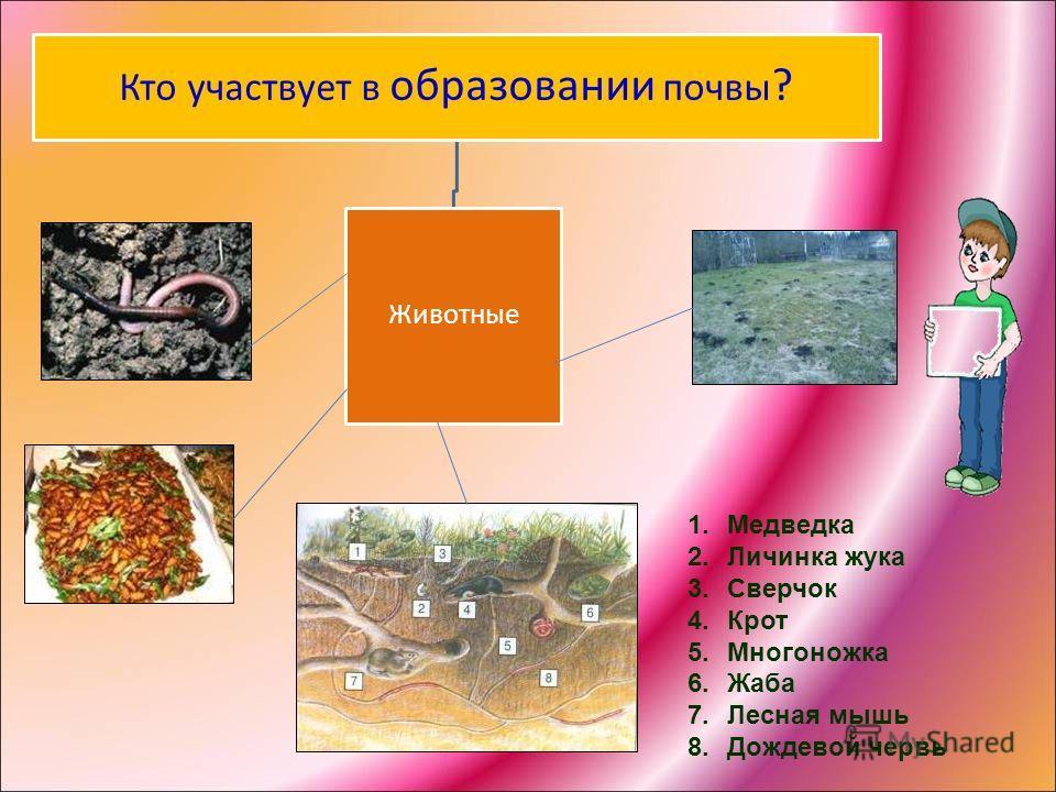 Кто участвует в образовании почвы ? Животные 1.Медведка 2.Личинка жука 3.Сверчок 4.Крот 5.Многоножка 6.Жаба 7.Лесная мышь 8.Дождевой червь