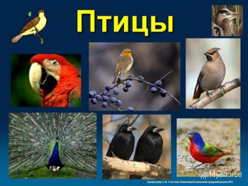 Кукарцева С.В. Учитель биологии Козульской средней школы 2