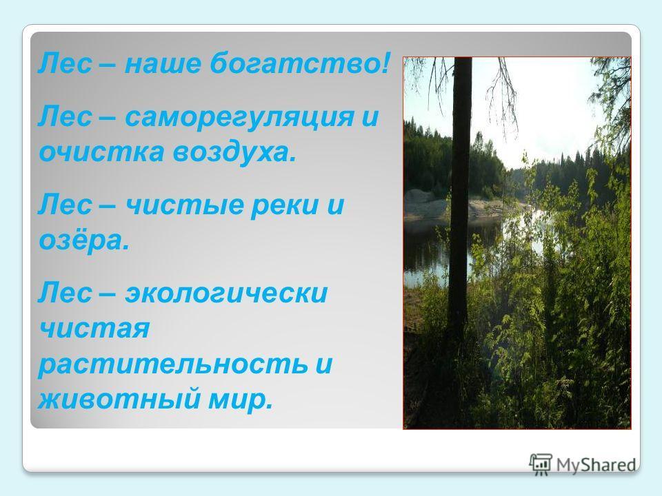Лес – наше богатство! Лес – саморегуляция и очистка воздуха. Лес – чистые реки и озёра. Лес – экологически чистая растительность и животный мир.