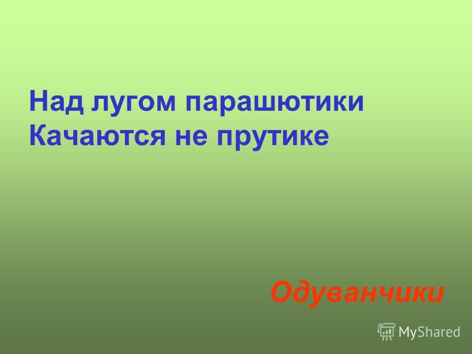 Над лугом парашютики Качаются не прутике Одуванчики