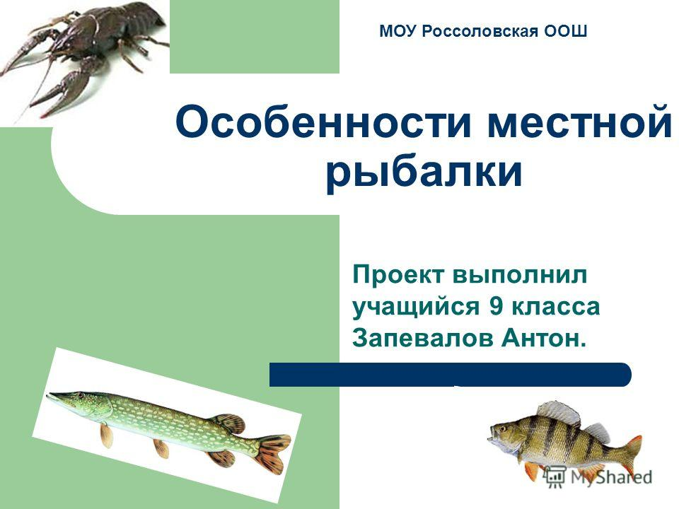 Особенности местной рыбалки Проект выполнил учащийся 9 класса Запевалов Антон. МОУ Россоловская ООШ