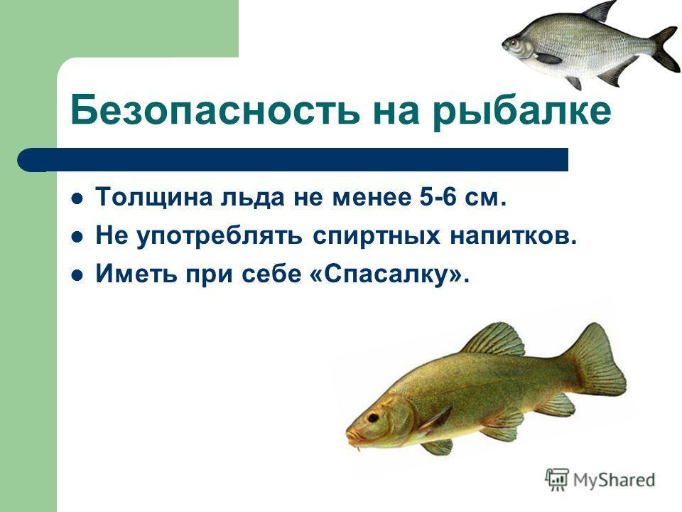 Безопасность на рыбалке Толщина льда не менее 5-6 см. Не употреблять спиртных напитков. Иметь при себе «Спасалку».