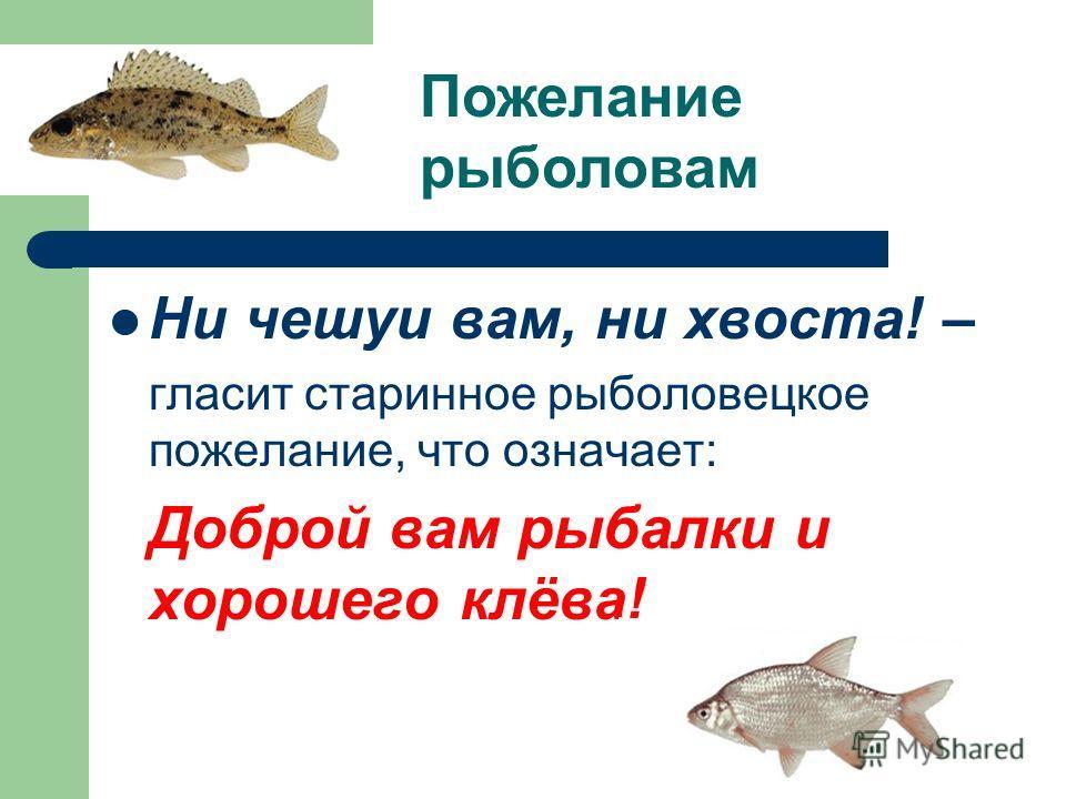 Ни чешуи вам, ни хвоста! – гласит старинное рыболовецкое пожелание, что означает: Доброй вам рыбалки и хорошего клёва! Пожелание рыболовам