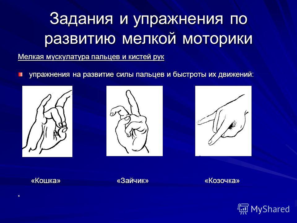 Задания и упражнения по развитию мелкой моторики Мелкая мускулатура пальцев и кистей рук упражнения на развитие силы пальцев и быстроты их движений: «Кошка» «Зайчик» «Козочка» «Кошка» «Зайчик» «Козочка»«