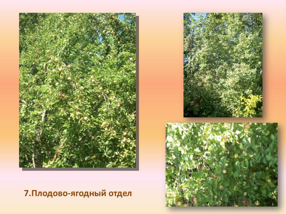 7.Плодово-ягодный отдел