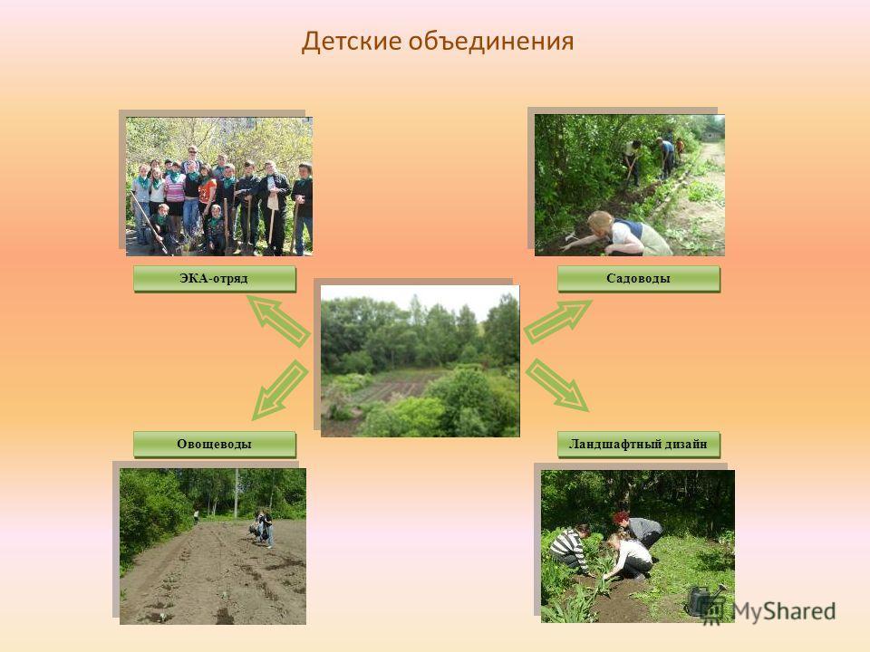 ЭКА-отряд Овощеводы Ландшафтный дизайн Садоводы Детские объединения