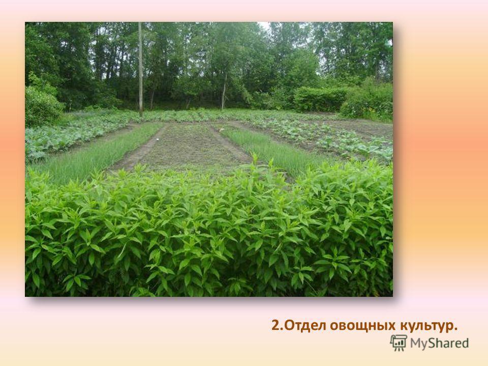 2.Отдел овощных культур.